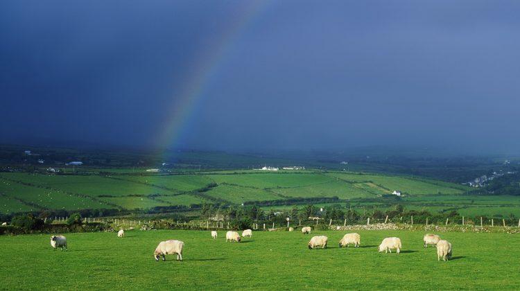 """13 οι δικαιούχοι Τρικαλινοί κτηνοτρόφοι της """"Βιολογικής Κτηνοτροφίας"""" που θα πάρουν 101.000 €"""