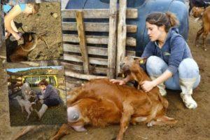 Οι 3 Τρικαλινές αδερφές τέταρτης γενιάς κτηνοτρόφοι!!!